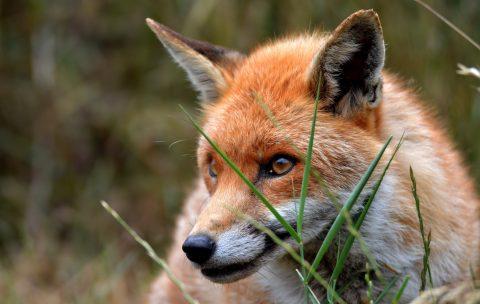 Firefox als Ermittlungsbrowser